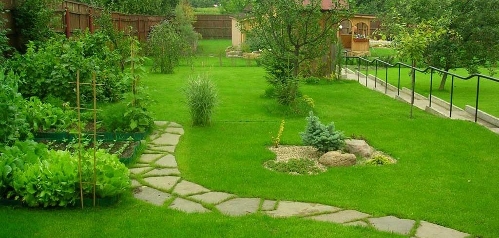 Озеленение дачного участка
